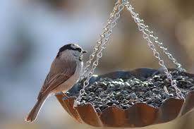 How To Attract Indigo Buntings To Your Backyard Best Bird Feeders In 2017 Attracting Birds To Your Backyard