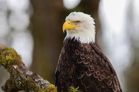 Oregon birds images Kids 39 guide to oregon birds audubon society of portland