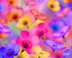 Images Of Pretty Flowers - flower wallpaper backgrounds flowers for flower lovers flowers