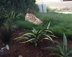 mar vista green garden showcase 3476 cabrillo boulevard
