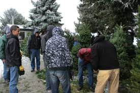 fresh cut christmas tree sale kicks off with the lake chelan lions