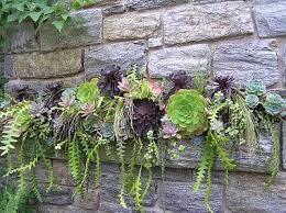 25 beste ideeën over succulent wall planter op pinterest sappig