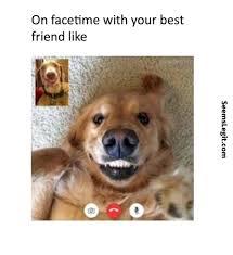 Tired Dog Meme - dog memes facetime dog memes pinterest dog memes and dog