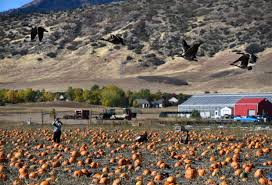 Chatfield Botanic Garden Photos Pumpkin Festival 2016 At Denver Botanic Gardens Chatfield