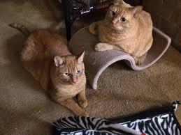 tom jerry cat