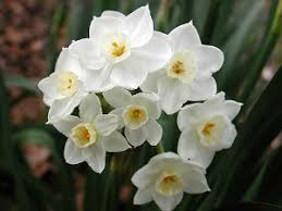 easy flowers to grow indoors 3 easy flower bulbs to grow indoors install it direct