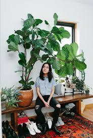 1324 best plants indoor images on pinterest plants indoor