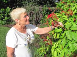 plants native to florida plant city woman u0027s native wildflower garden wins statewide honors