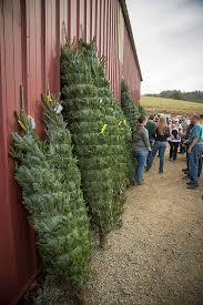christmas best christmas tree farms ideas on pinterest diy