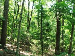 Alabama forest images 13 acres of hunting land joining talladega national forest in jpg