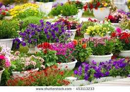 Types Of Garden Flowers - free different kinds of garden flowers in pots landscape design
