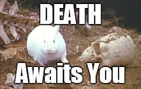 Monty Python Meme - monty python rabbit meme python best of the funny meme