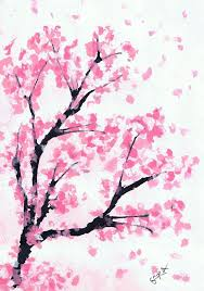 drawn cherry blossom peach blossom pencil and in color drawn