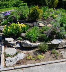 rock gardens designs evergreen plants and flowering plants with