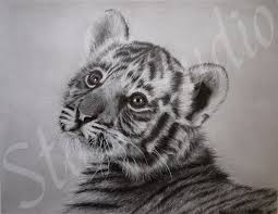 22 best drawing animals images on pinterest drawing animals