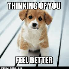 Sick Puppy Meme - when you sick