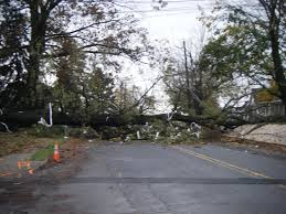 file hurricane downed tree kutztown pa jpg wikimedia commons