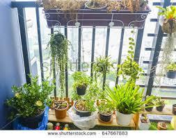 natural plants hanging pots balcony garden stock photo 656723161