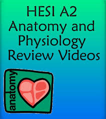 Anatomy And Physiology Midterm Exam Best 25 Anatomy And Physiology Courses Ideas On Pinterest Human