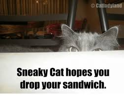 Sneaky Cat Meme - catlady land sneaky cat hopes you drop your sandwich cats meme on