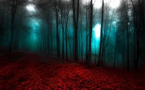 nature landscape red forest mist trees path wallpapers