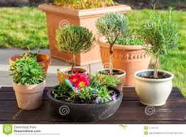 flower pots with herbs and flowers stock photo image 51764170