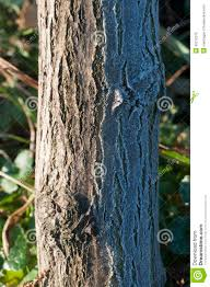 half tree trunk covered with stock photo image 45272575