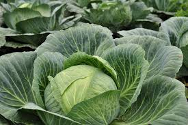 What To Plant In Your Vegetable Garden by How To Avoid Early Season Pests In Your Vegetable Garden Farm