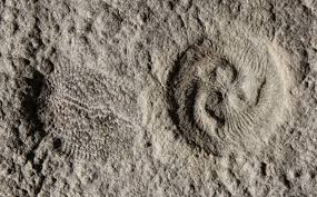 engineering mysterious 500 million year fossils that confound