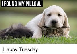 Tuesday Meme - i found my pillow happy tuesday meme on me me