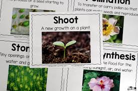 plants unit powerpoint lessons printables a dab of glue will do