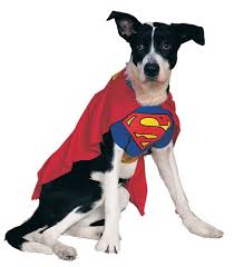 halloween costumes com coupon amazon dog halloween costumes starting at 8 32 the coupon