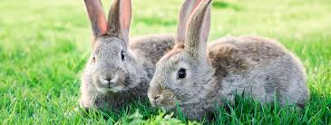 rabbit banner vets for pets luxstowe vets