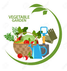 vegetable garden fresh vegetables in a basket and garden tools