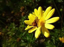 national flower of spain red carnation nationalextras com