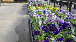 Flowershop Pecks Flower Shop U0026 Garden Center Go Cedar Rapids