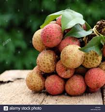 fruit similar to lychee vietnam fruit litchi or lychee a tropical fruits that delicious
