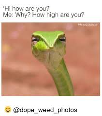 How High Are You Meme - 25 best memes about how high are you how high are you memes
