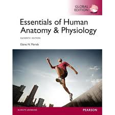 Anatomy And Physiology Made Incredibly Easy Pdf Booktopia Essentials Of Human Anatomy U0026 Physiology By Elaine N