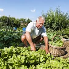 Urban Vegetable Garden by Having A Garden Is Easier Than You Think Home Care Plus