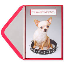 chihuahua in spike collar s day cards papyrus