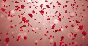 animation of romantic flying red rose flower petals backdrop