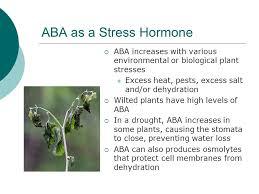 High Heat Plants Plant Hormones Ppt Video Online Download