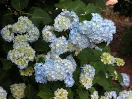 nbg plant sale 2017 top picks norfolk botanical garden