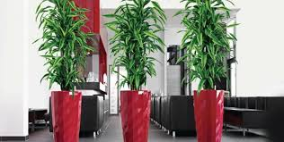 charming ideas potted indoor plants likablesilk house plants