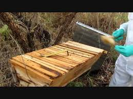 Harvesting Honey From A Top Bar Hive Harvesting Top Bar Hive Honey In Uganda Youtube