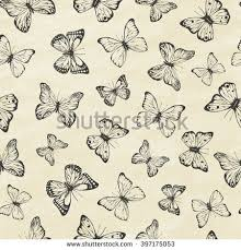 set butterflies entomological collection stock vector