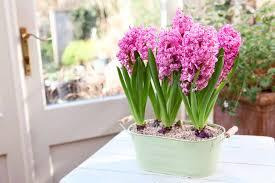 Fragrant Indoor House Plants Gardening Job Checklists September Gardenersworld Com