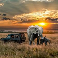 apple wallpaper elephant elephant hd desktop wallpaper 29725 baltana