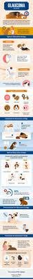 What Causes Dogs To Go Blind Glaucoma In Dogs Causes Signs U0026 Treatment Canna Pet